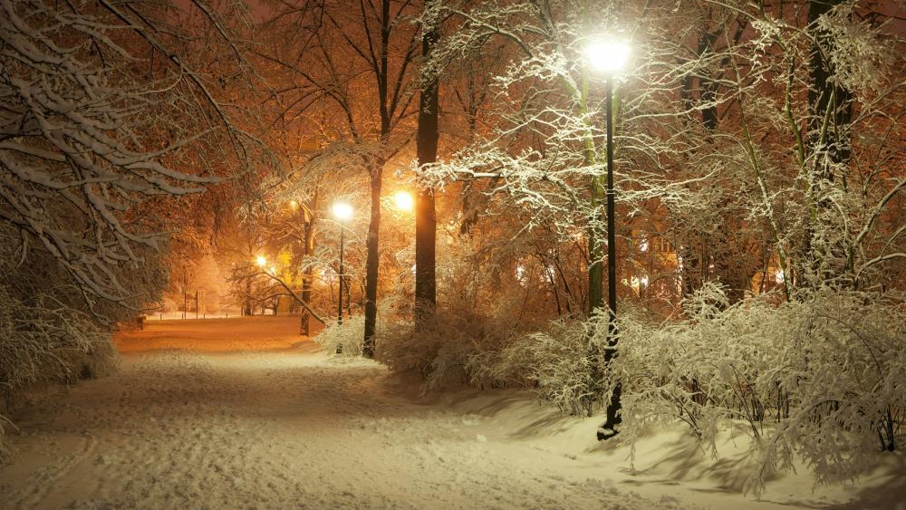 Snowy city park at night wallpaper