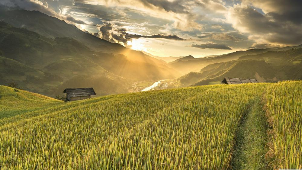 Hoang Suphi paddy field wallpaper