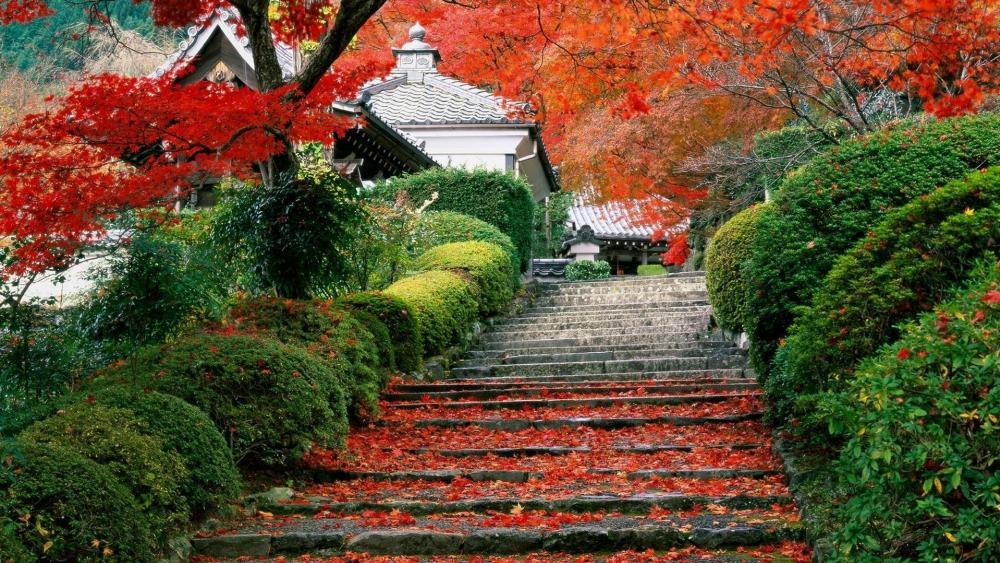 Japanese garden in Kyoto wallpaper