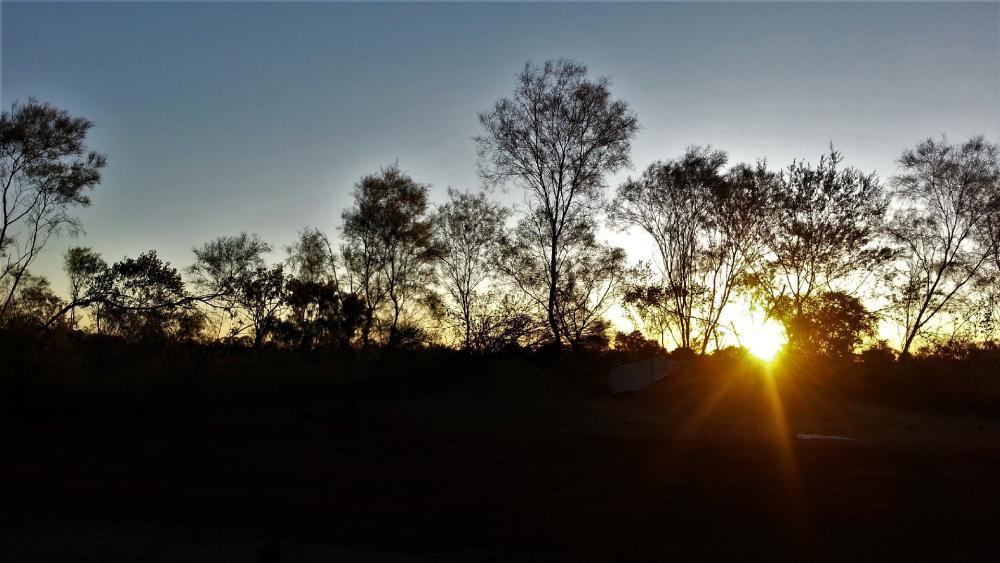 Sunset in a Aussie bush wallpaper
