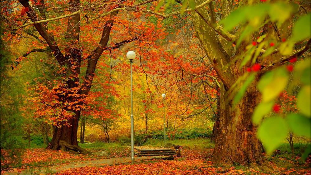 Walkway in a park at fall wallpaper