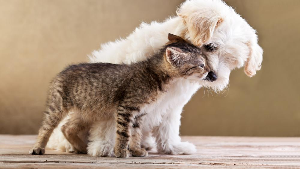 Kitten and puppy friendship wallpaper
