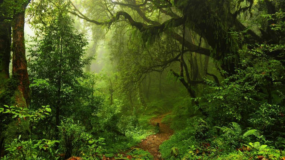 Green forest in summer wallpaper