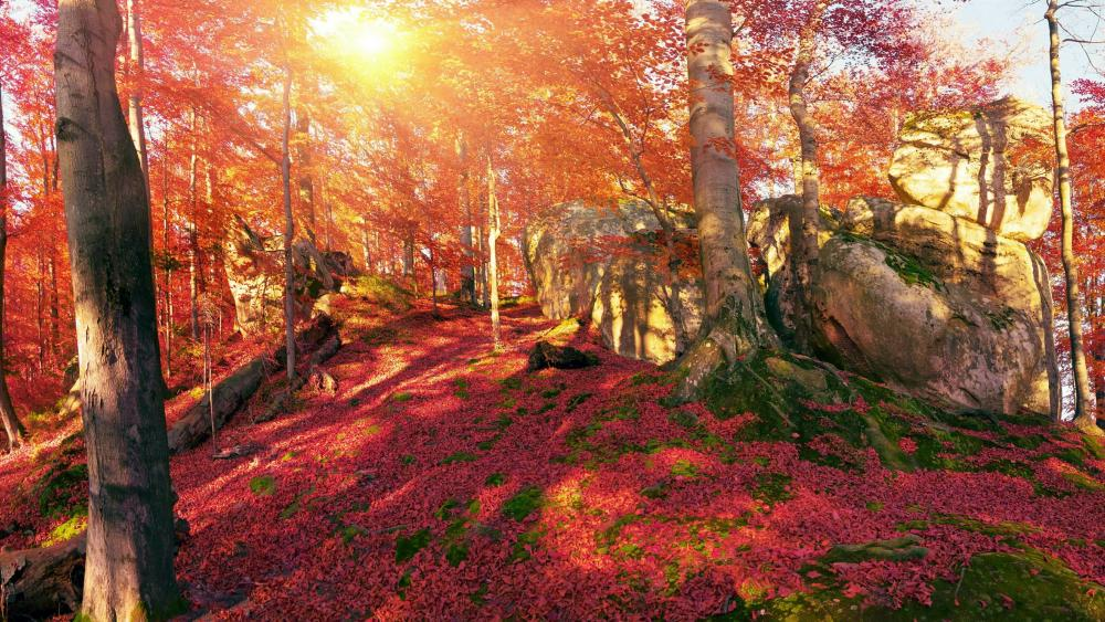 Transcarpathia fall forest wallpaper