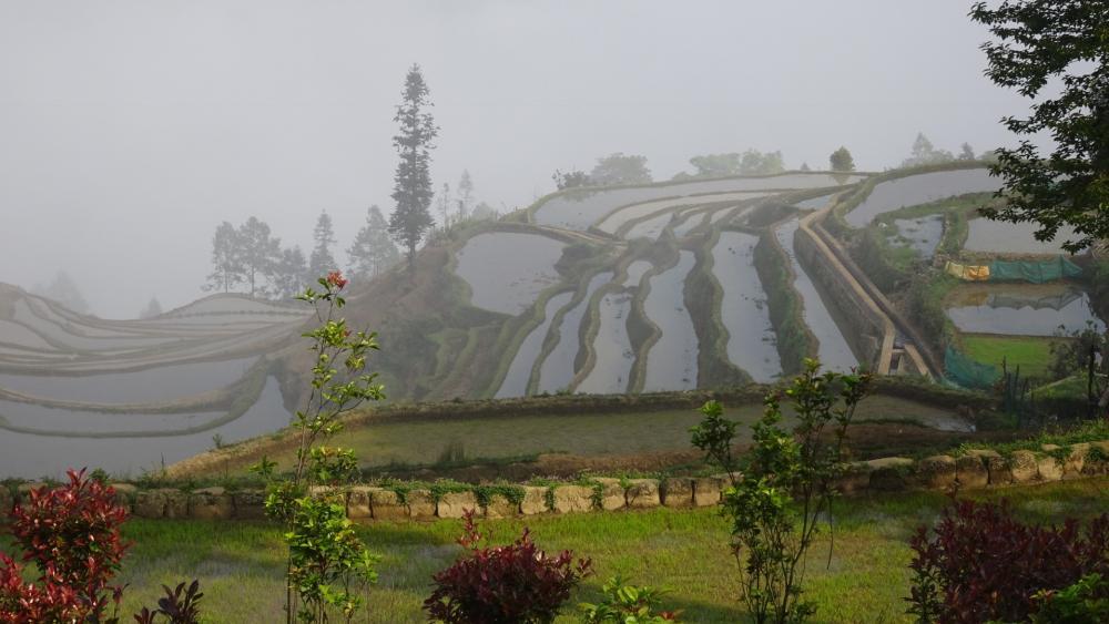 Rice Terrace wallpaper