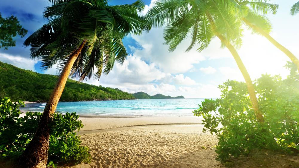 Tropical beach with palms wallpaper