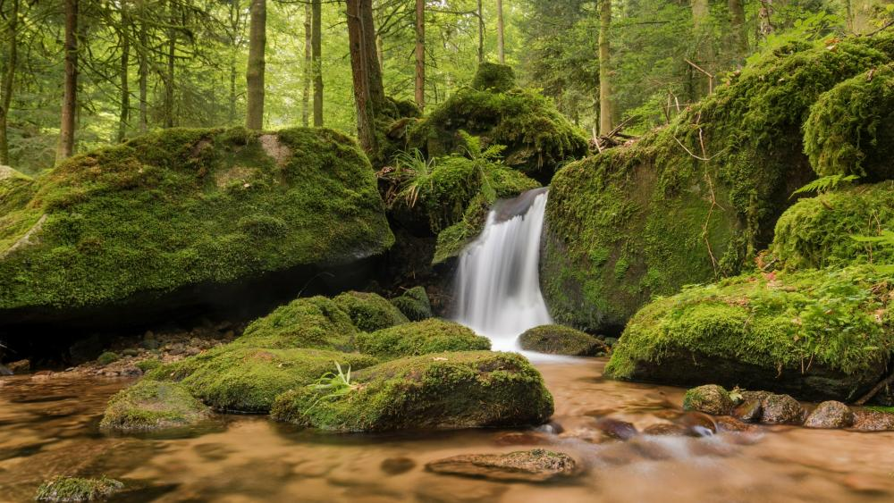 Gertelbach falls in the Black Forest, Germany wallpaper