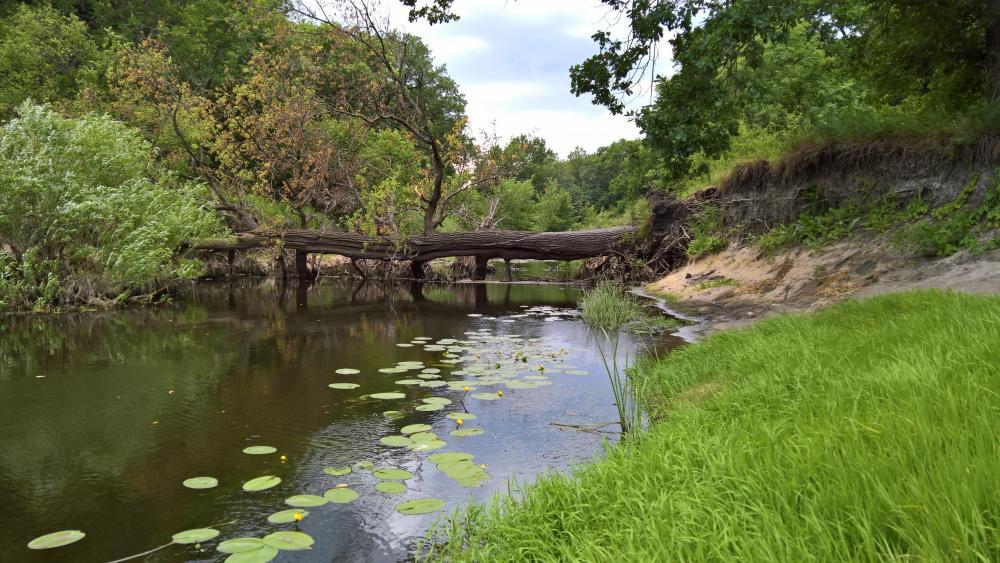 River in Pavlohrad wallpaper