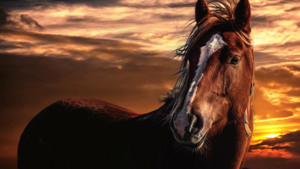 Brown horse at sunset wallpaper