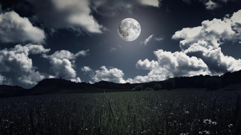Field in the moonlight wallpaper