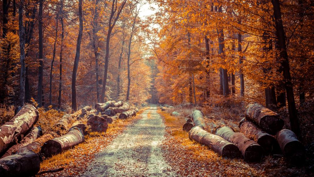 Wood logs along the forest road wallpaper