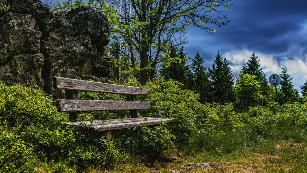 Bench in the nature wallpaper