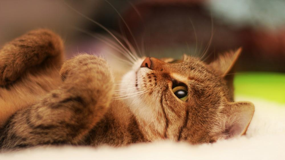 Cute lying kitten wallpaper