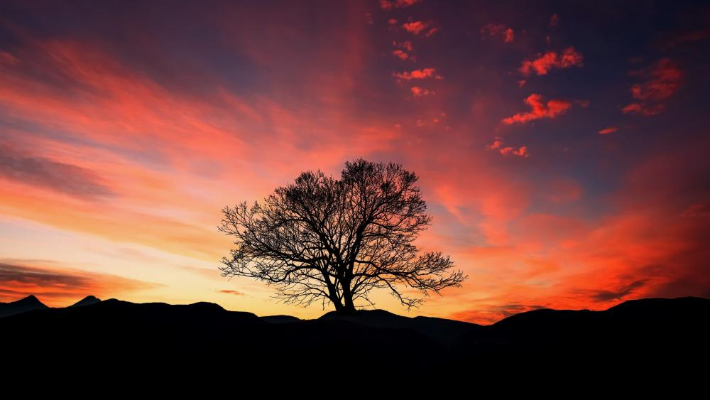 A lone tree silhouette wallpaper