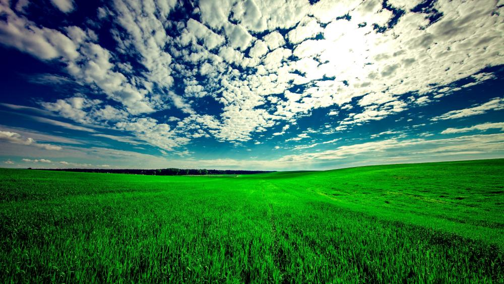 Green field wallpaper