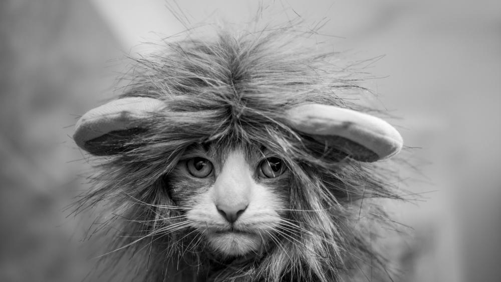 Kitten in lion costume wallpaper