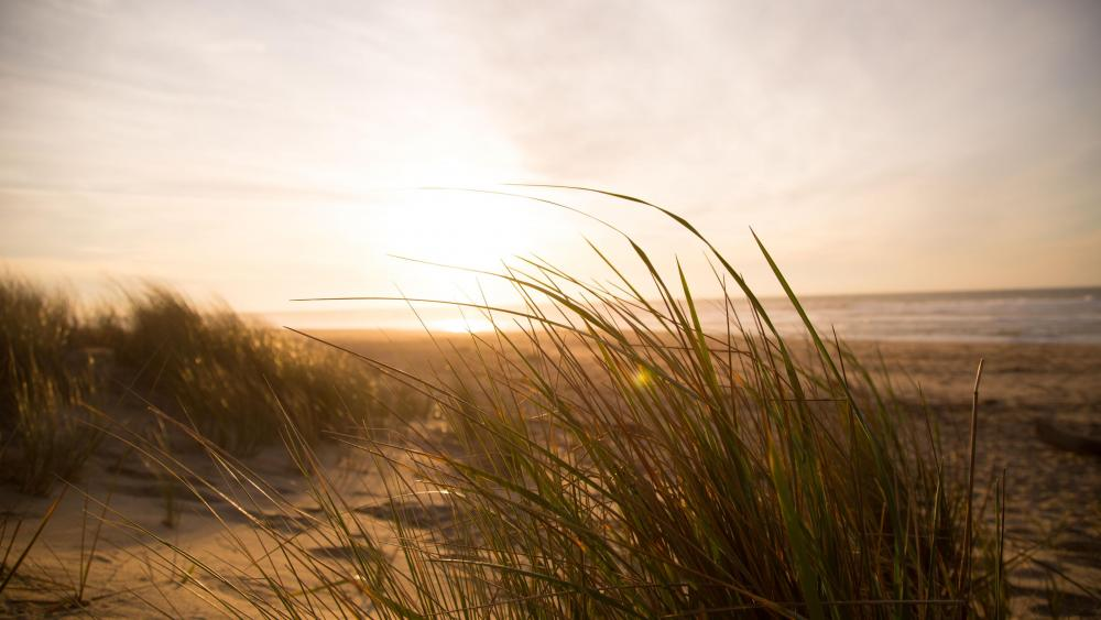 Grassy sand dune on the beach wallpaper