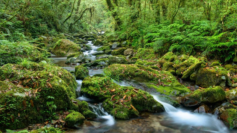 Mossy creek wallpaper