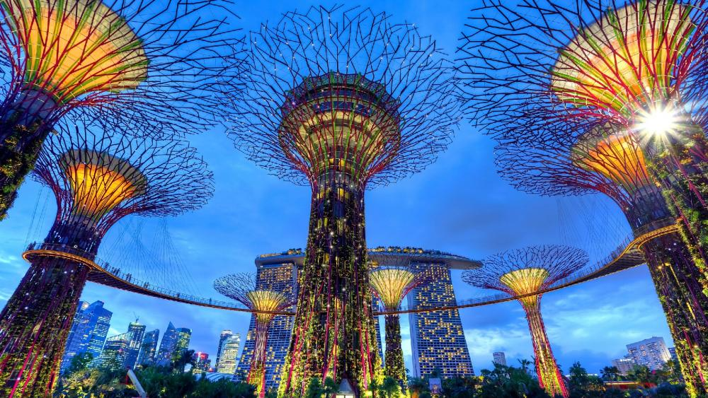 Supertree Grove, Gardens by the Bay wallpaper