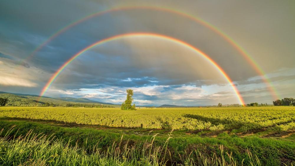 Double rainbow wallpaper