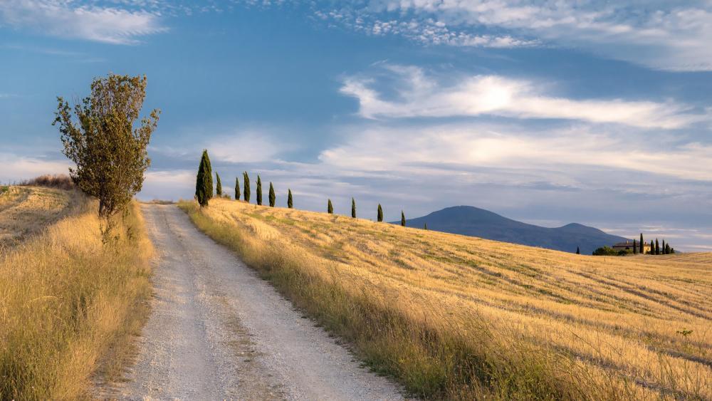 Cypresses along the dirt road wallpaper