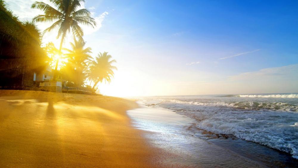 Tropical summer sunrise wallpaper