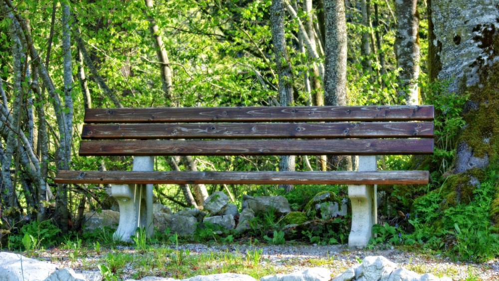 Bench in a park wallpaper