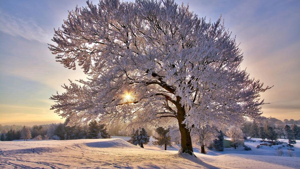 Beautiful frosty tree wallpaper