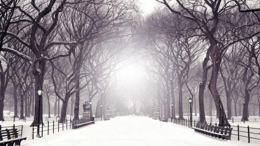 The Mall and Literary Walk in winter wallpaper