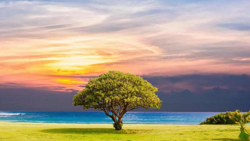 Lone tree on the beach wallpaper