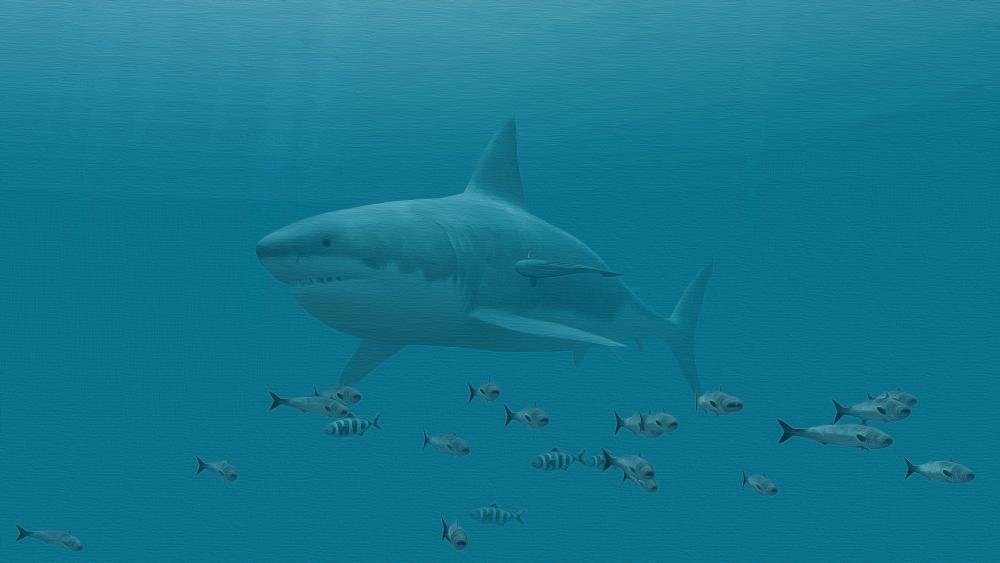 Great white shark 🦈 wallpaper