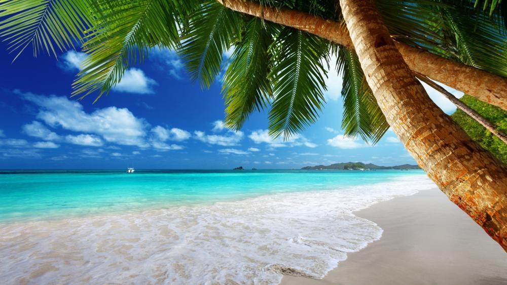 Tropical beach 🌴 wallpaper