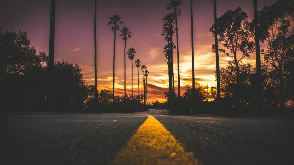 Palm tree lane wallpaper