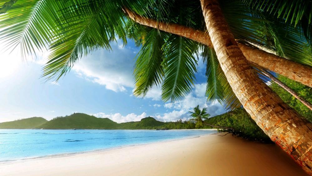 Exotic beach wallpaper