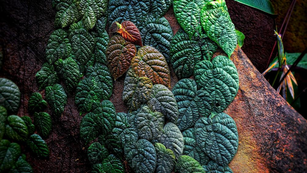 Green leaves macro photo wallpaper