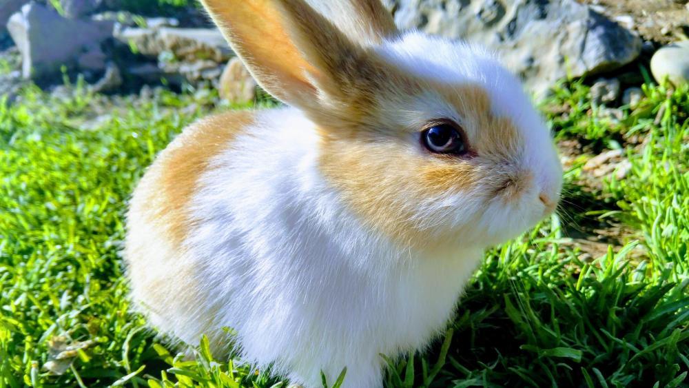 Little bunny wallpaper
