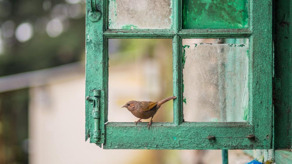 Bird sitting on a window wallpaper