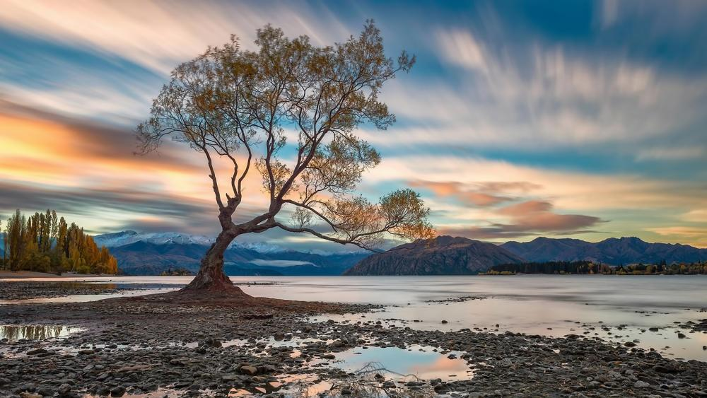 Wanaka's lone willow wallpaper