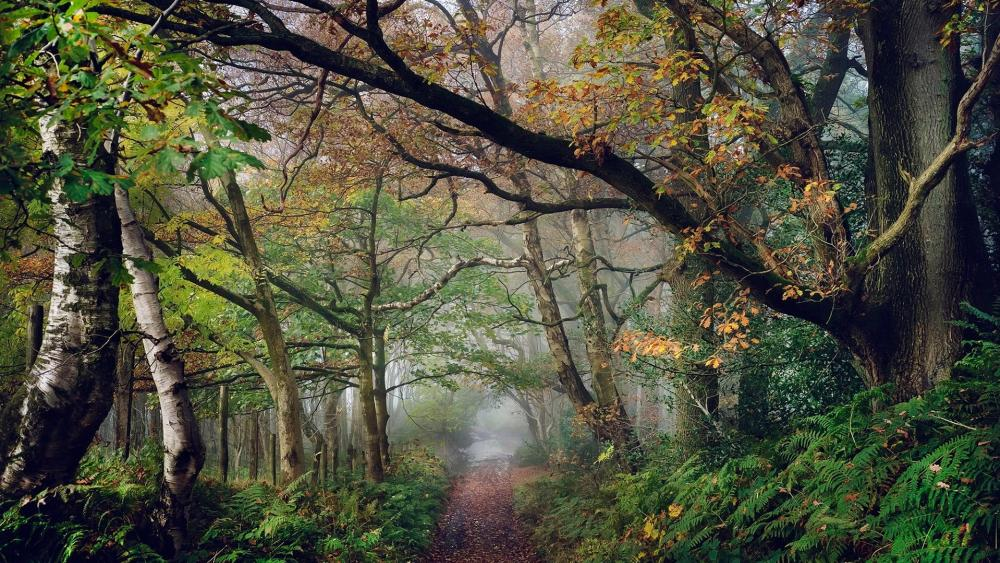 Path in the autumn forest wallpaper