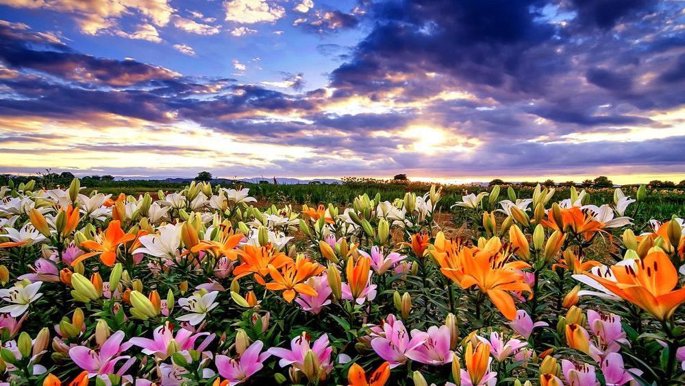 Flowery Field wallpaper