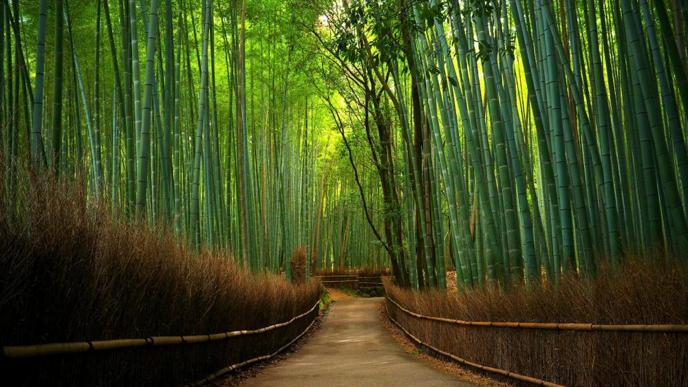 Hutan Bambu wallpaper