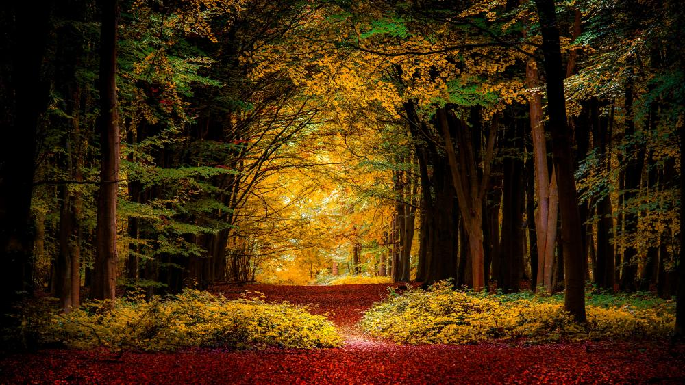 Path in the fall forest wallpaper