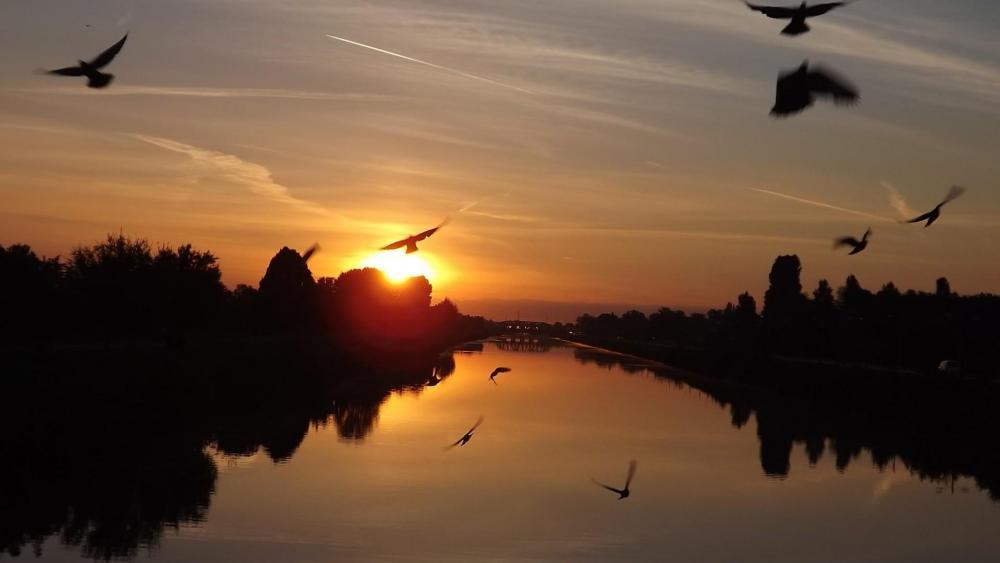 Birds in the sunset wallpaper