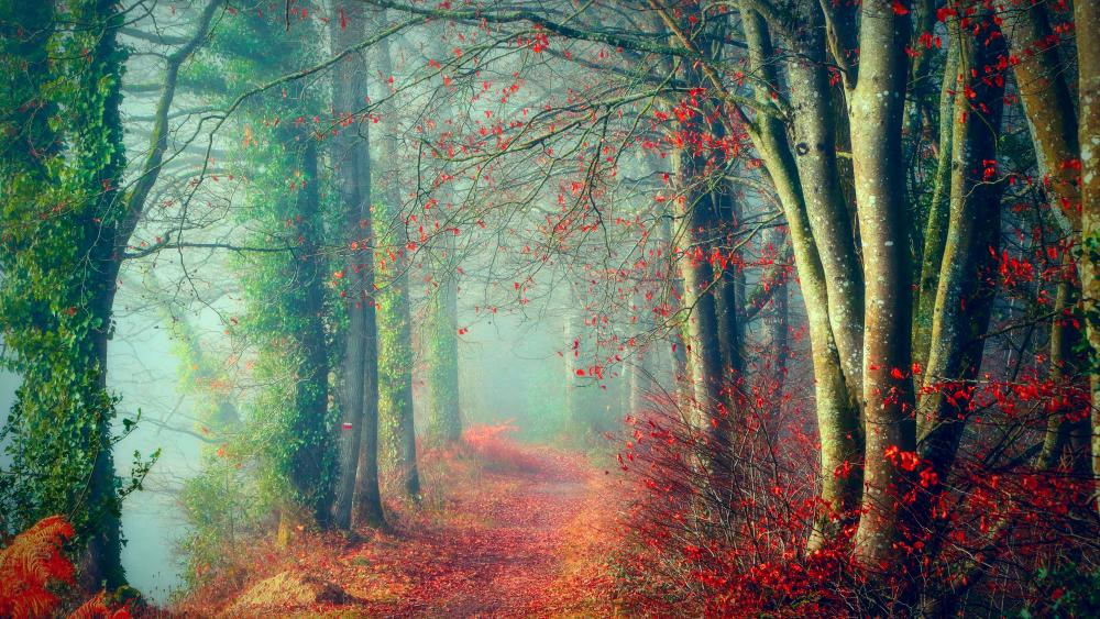 Foggy Forest path wallpaper