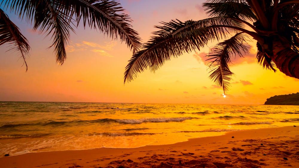 Tropical sunset wallpaper