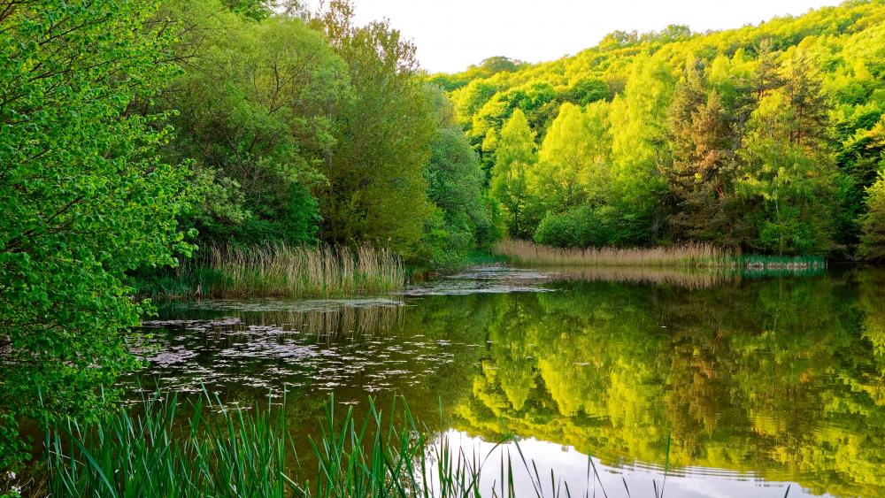 Riparian forest reflection wallpaper