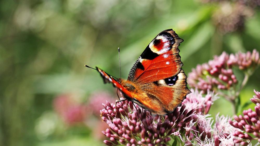 Butterfly on a flower 🦋🌺 wallpaper