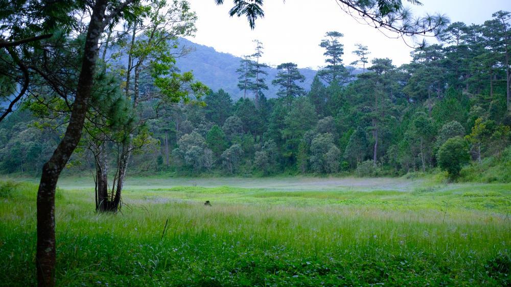 Tuyen Lam Lake at rain season wallpaper
