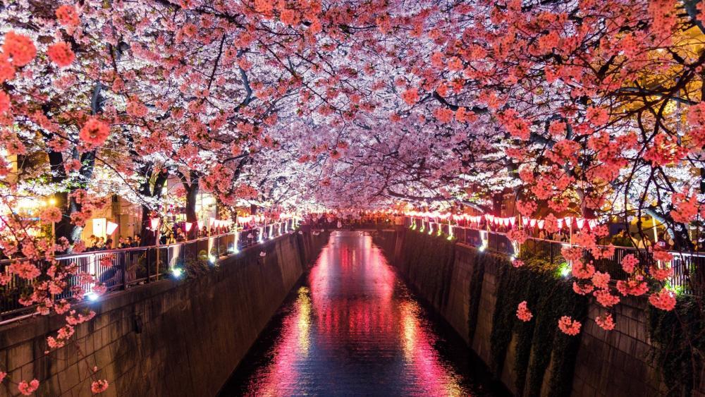 Sakura Tunnel in Tokyo wallpaper