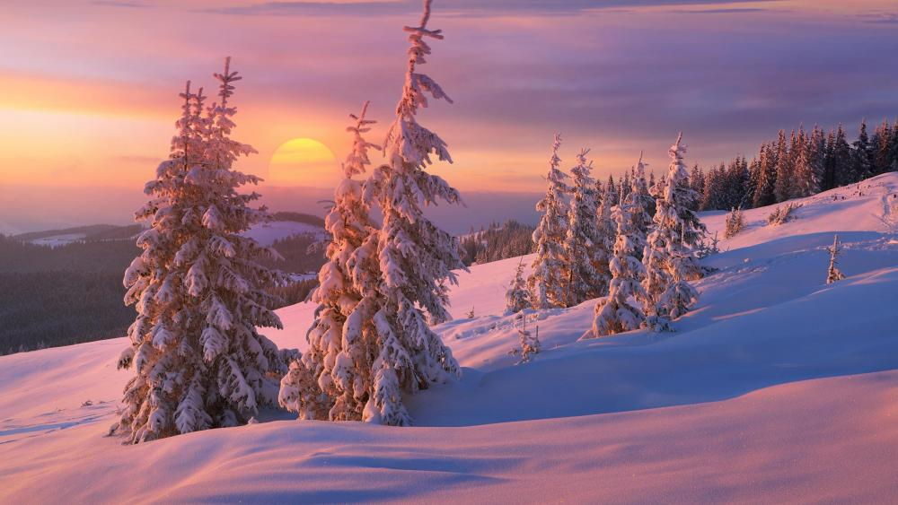 Winter sunrise wallpaper